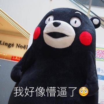 熊本熊一脸懵b表情包下载高清无水印版